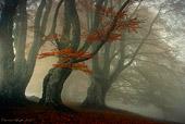 pioppeto, bosco fatato nella nebbia, paesaggio naturalistico di Carmen