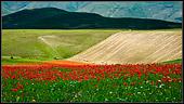 stefano maria ha fotografato un fotografia naturalistica di paesaggio, prato fiorito di papaveri